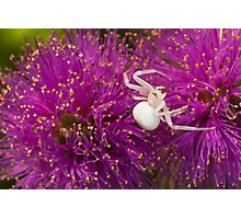 Casper, the friendly spider Photographic Print