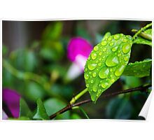 rain leaf Poster