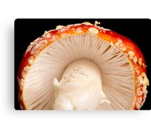Gill Side Up Canvas Print