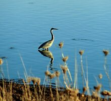 Great Blue Heron by Kathleen Daley
