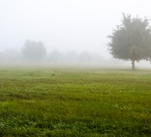 Foggy Field by Douglas Hamilton
