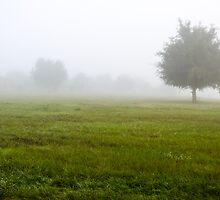 Foggy Field by Douglas Hamilton