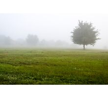 Foggy Field Photographic Print