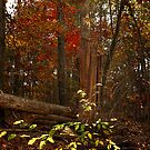 Fall In The Deep Dark Woods by Jim Haley