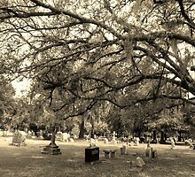 Withered Branch's Reaching Artistic Photograph by Shannon Sears by twobrokesistas