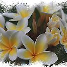 Frangipani Dreams by Keith G. Hawley