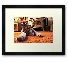Cat Nap Xmas Framed Print