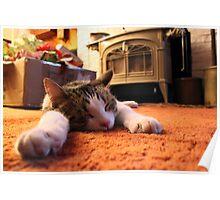 Cat Nap Xmas Poster