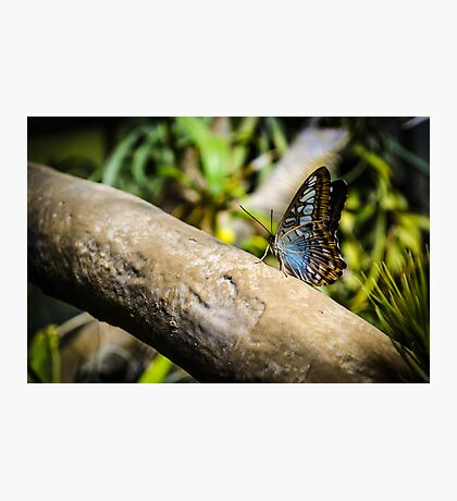 Butterfly Perch Photographic Print