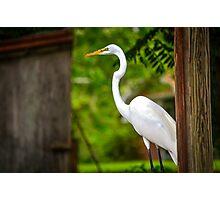 Crane on the lake shore Photographic Print