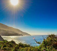 Shoreline View by Douglas Hamilton