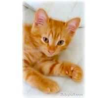 Quo - Kitten Photography By Giada Rossi Photographic Print