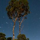 Tree among the stars - an Australian gumtree against the nightsky, Queensland by Fineli