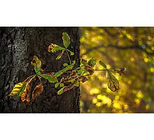 Wonderful autumn Photographic Print