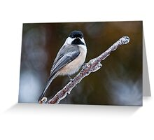 Chickadee on ice covered branch - Ottawa, Ontario Greeting Card