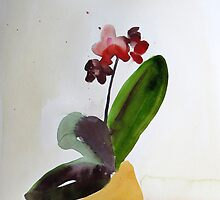 Provigo Orchid #10, watercolour by Edith Dora Rey