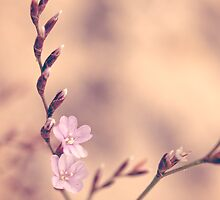 Tiny Flowers by Trudi Skinn