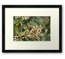 Ladybugs on Thistle Framed Print