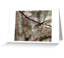 Head of a Red Sided Garter Snake in a Tree Greeting Card