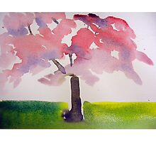 A Tree Grows In Washington, DC Photographic Print