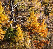 Forest Glade by Wib Dawson