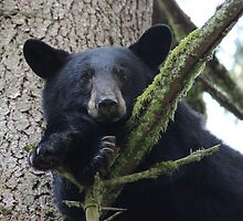 Black Bear by Darren Quarin