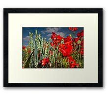 Poppies and wheat Framed Print