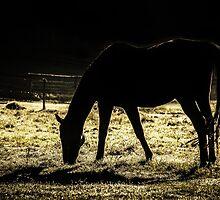 Horse by tamás klausz