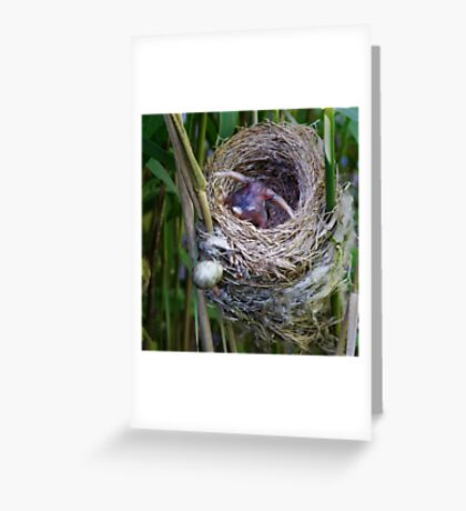 Cuckoo chick ejecting Reed Warbler egg Greeting Card