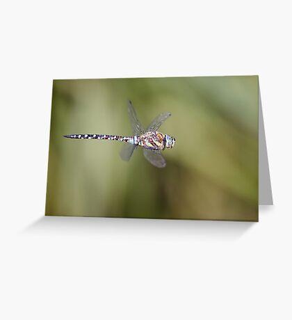 Migrant Hawker in flight Greeting Card