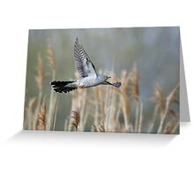 Cuckoo flying amongst reeds Greeting Card
