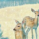 The Faces of Deer by Nikella