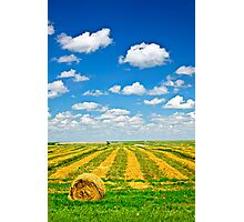Wheat farm field at harvest Photographic Print