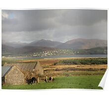Cows, field and building Poster