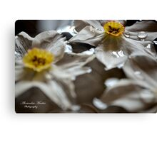 Floating Narcissus Canvas Print