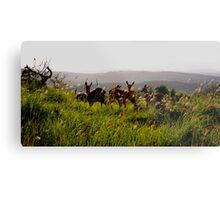 deers south africa Metal Print