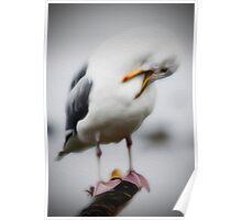 Posing Gull Poster