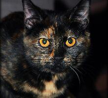 Sweet Little Elsie by jodi payne