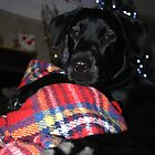 Christmas Black Labrador by Lynn Ede
