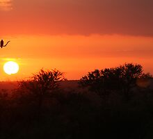 Kruger Sunrise by JenniferEllen