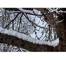 Snow Branches Photographic Print