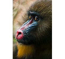 Mandrill Photographic Print