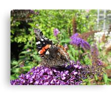 Butterfly repository Canvas Print