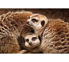 Meerkats Photographic Print