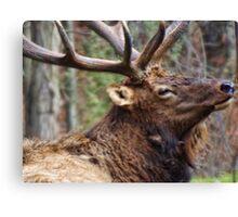 The Bull Elk Canvas Print