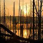 Sunrise Reflections by Delmas Lehman