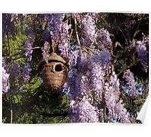 Birdhouse In The Wisteria Poster