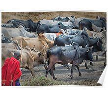 Masai cattleman Poster