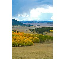 CO 285 Aspens Photographic Print