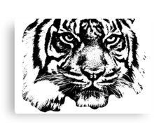 Tiger, big cat, hunter and predator Canvas Print